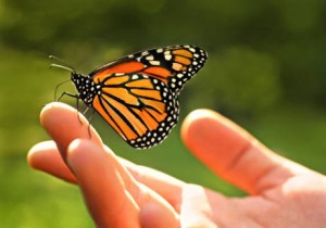 Ideas are as fragile as butterflies on the wing.