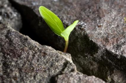 How Do You Overcome Limitations?