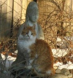 How to Build a Feral Cat Shelter: Part Fifteen