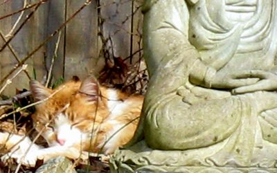 How to Build A Feral Cat Shelter:  Part One